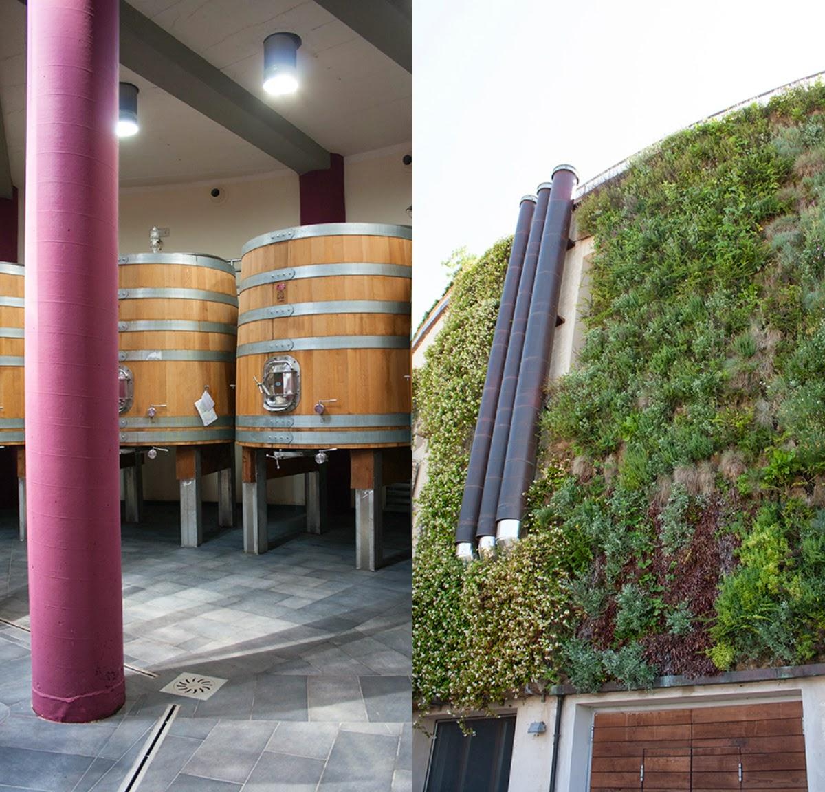 cantina salcheto giardino verticale
