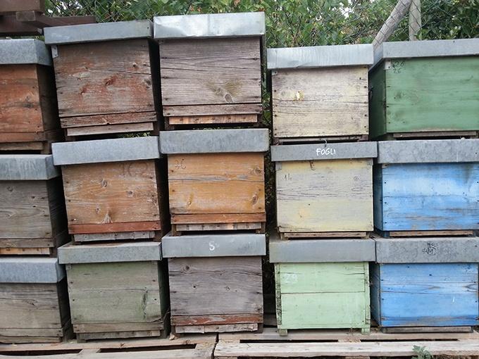 isola elba cosa gustare il miele
