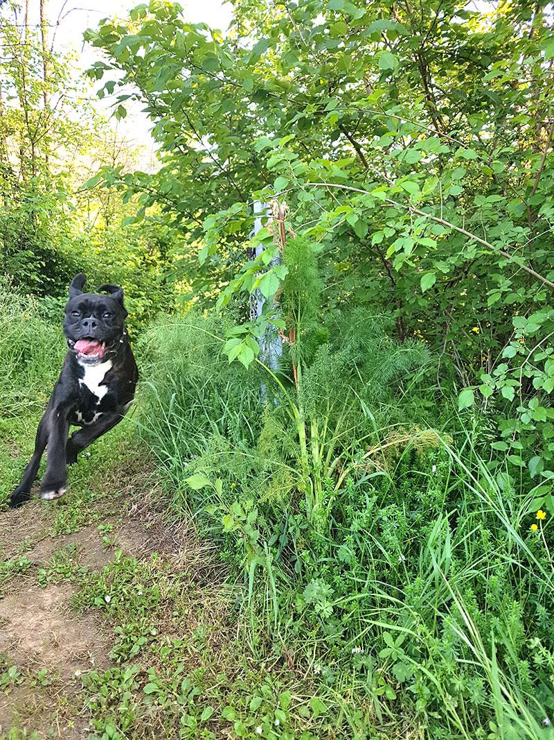 lilo rennt