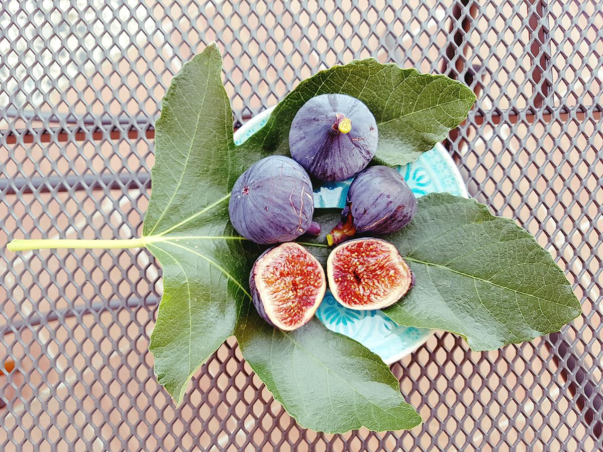perché the black fig