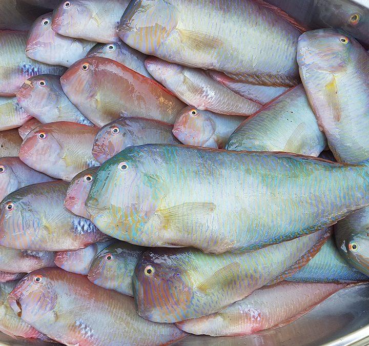 pesci pettini per pettini fritti